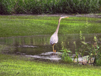 A Bird In The Pond