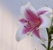 My flower ollecti...