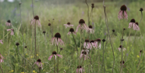 Wild Flowers on the Prairie