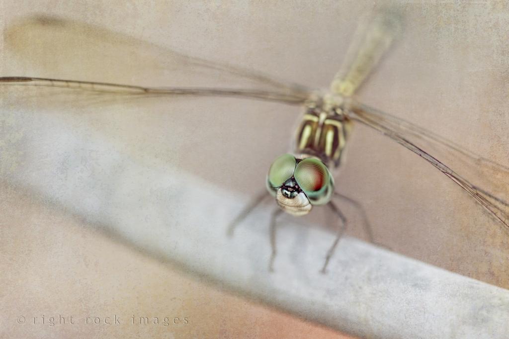 Bug Eyes
