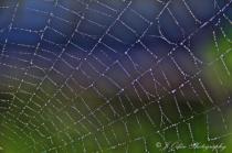 Web and Dew Drops
