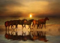 Amber Herd