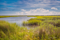Carolina Salt Marsh