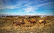 ~ ~ KAZAKHSTAN'S HORSES BY THE ROAD ~ ~
