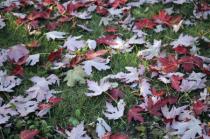 Autumn :eaves. Toronto