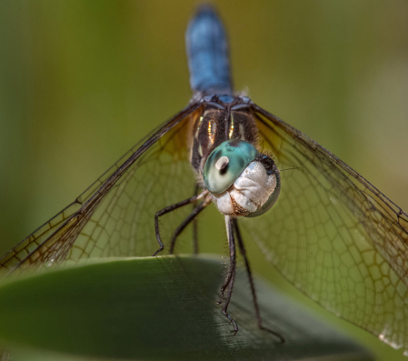 My New Friend - The Dragonfly