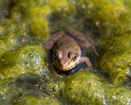 Frog in the Moss