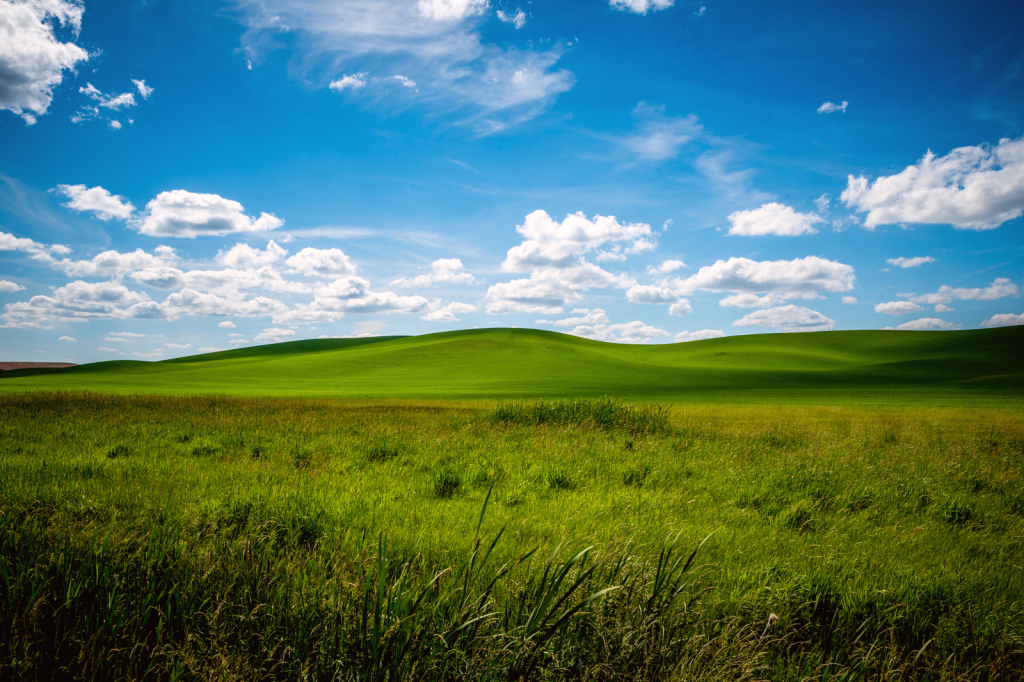 Summer time in the Palouse