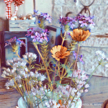 Wild Flowers for the House