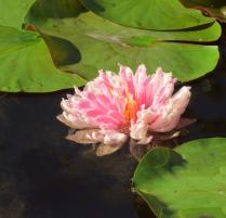 Clear Lake Community Garden