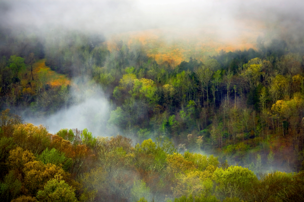 Arkansas Grand Canyon Misty Morning