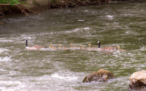 Running The Winnebago River