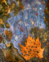 of Ice and Sycamore