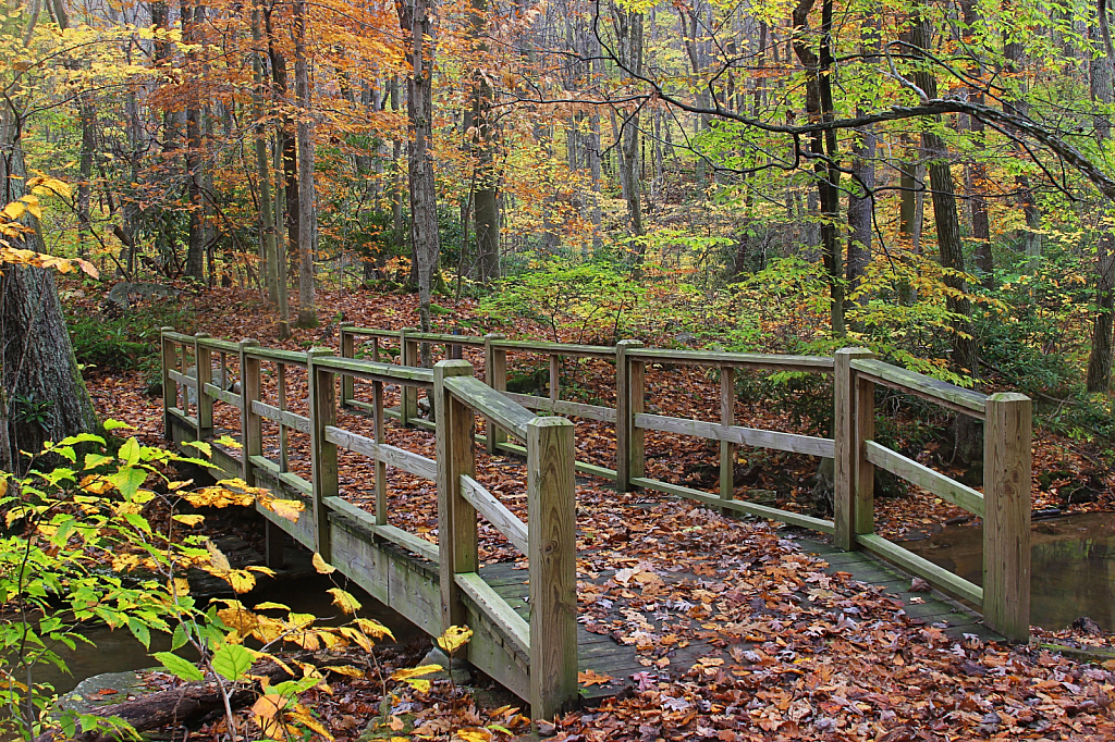 Autumn Footbridge