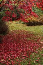 A corner of the garden in autumn