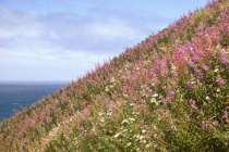 Coastal NW Wildflowers