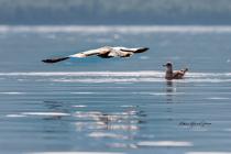 Morning Kayaking - Life Is Good!