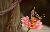 Flower is Butterfly
