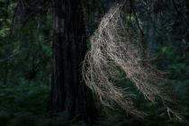 Whimsical Lichen
