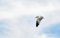 Solitary Flight