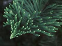 A part of Pine Plant..