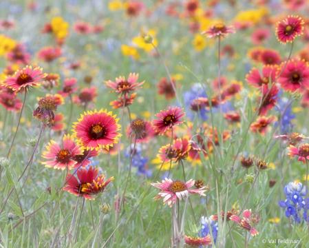 Wildflower Explosion