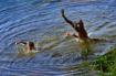Diving boys