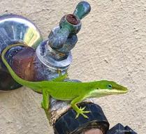 Water Supply Monitor