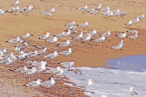 Seagulls at the beach.