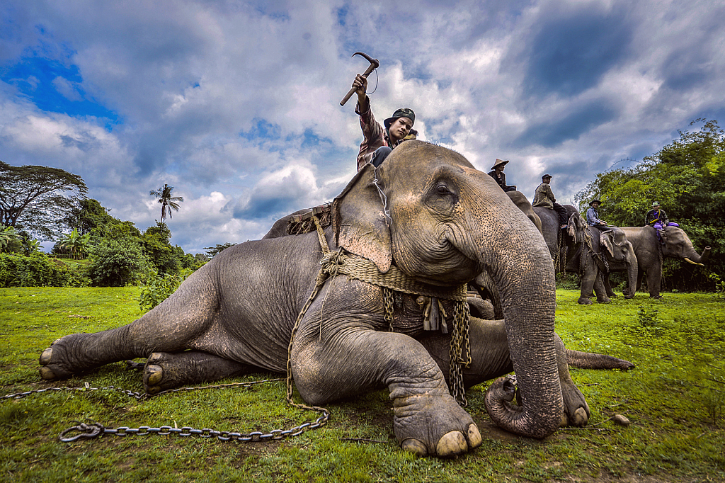 Elephant Controller