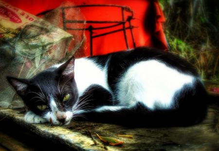 ~ ~ RESTING CAT ~ ~