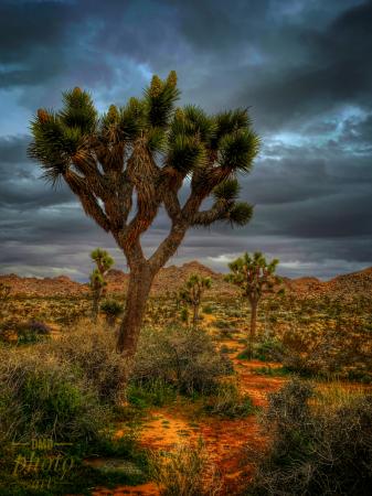 ~ ~  STORM IN THE DESERT ~ ~