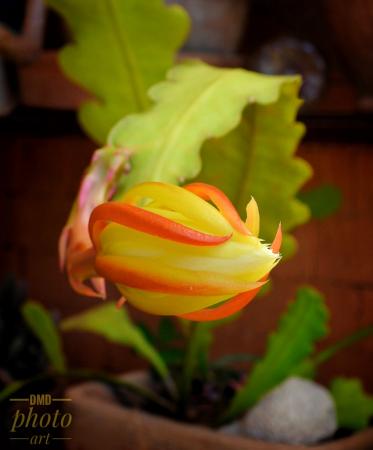 ~ ~ CACTUS FLOWER ~ ~