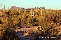 The Sun Sets in Saguaro NP
