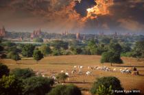 Evening in Bagan