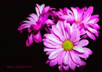 Many shades of pink....