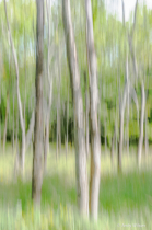A Woodland Abstract