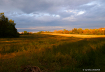 Evening Glow IMG_4817