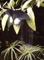 Butterfly with waterfall