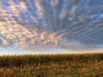 Clouds Over Corn Field