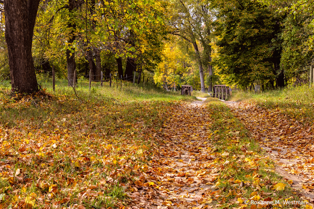 Country roads in the fall - ID: 15854517 © Roxanne M. Westman