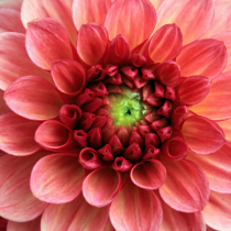 Every Petal in Place