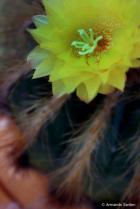 Cactus princess