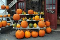 Lotsa Pumpkins!