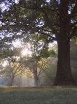 Inspiration - Local Park