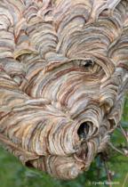 Spirals IMG_5096