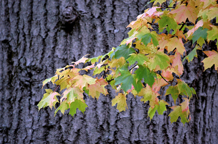 Turning to Fall