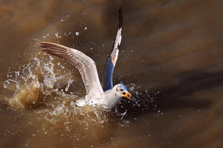 Catching Food