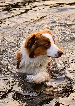 Water Dog !!