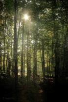 Michigan Woodland